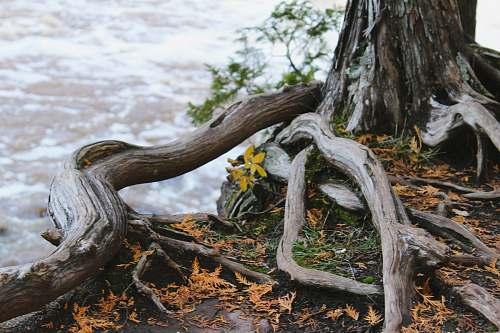 root grey tree during daytime flora