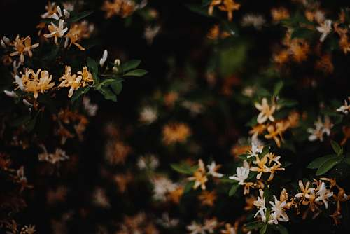 flower Ixora plant flora