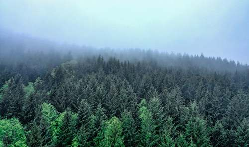 tree landscape photography of green-leafed trees pine