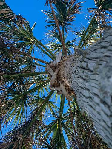 tree low angle photography of palm tree during daytime arecaceae