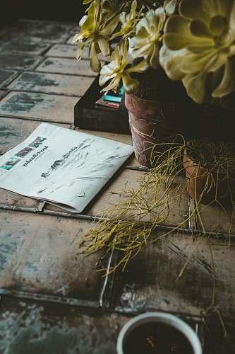 blossom newspaper beside plant book