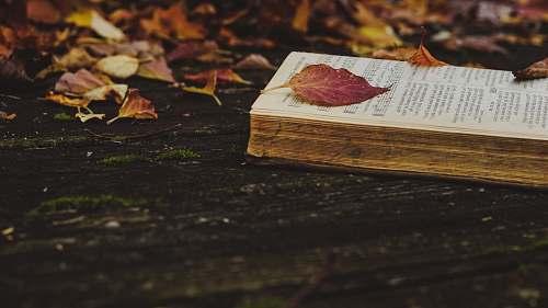 leaf opened book book