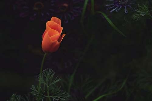 blossom orange petaled flower flower