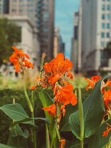 blossom orange-petaled flowers flower