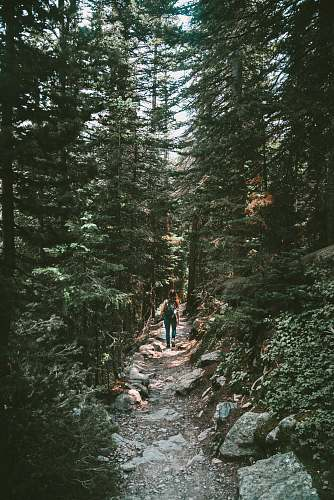 tree person walking on rough road surrounded by trees abies