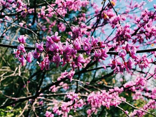 blossom pink flowers in tilt shift lens flower
