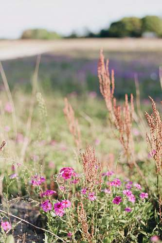 grass pink petaled flowers at daytime jar