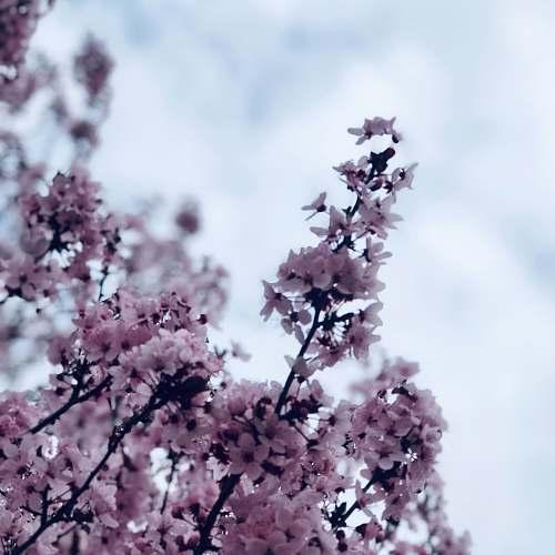 flower purple-petaled flowers blossom