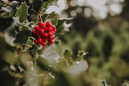 food red berries fruit