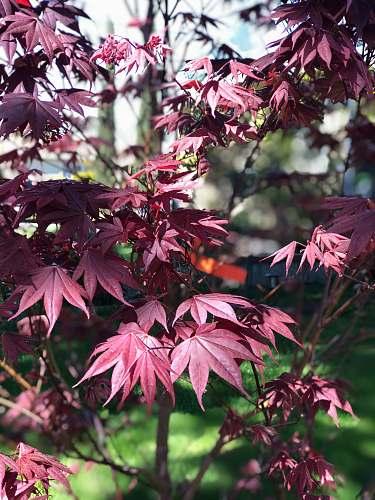 tree red leaves on green tree leaf