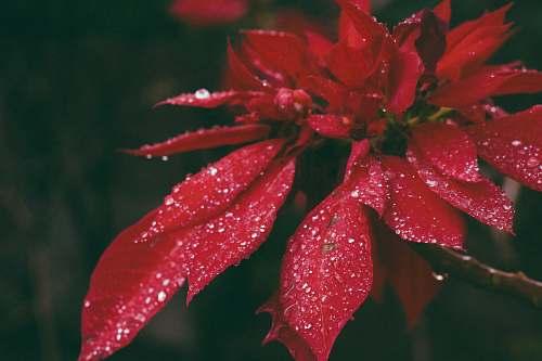 leaf red petaled flower blossom