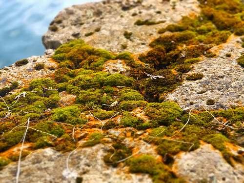 moss rocks covered with green moss harrington beach state park