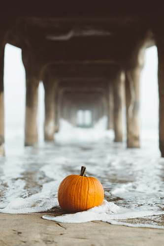 flora selective focus photography of pumpkin on seashore food