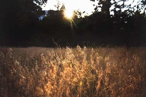 flora shallow focus photo of grass grass