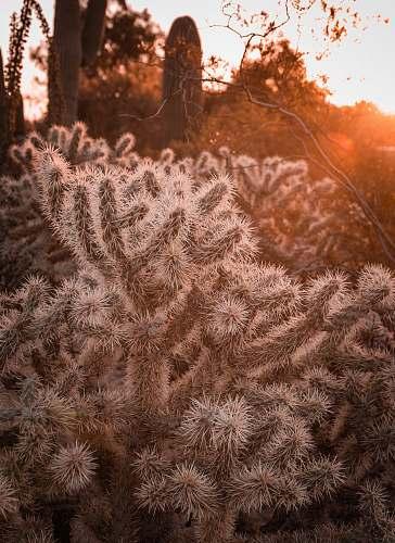 nature white cactus plant grass