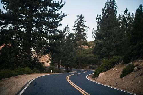 highway black asphalt road in the middle of trees during daytime yosemite national park
