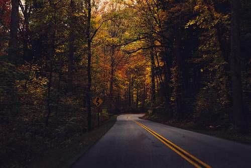 forest empty road between trees highway