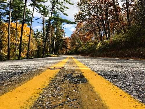 asphalt gray and yellow road between trees dirt road
