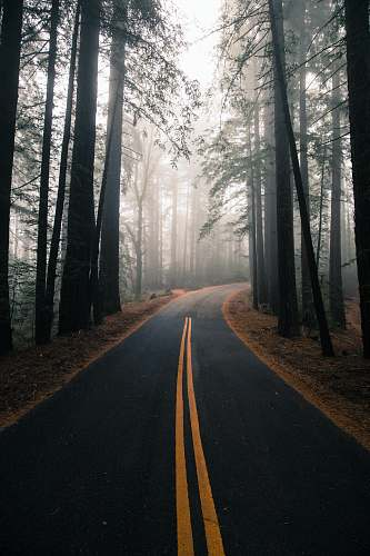 forest gray and yellow road surrounded by trees tree