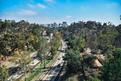freeway vehicle passing on road in between trees with buildings ahead at daytime balboa park