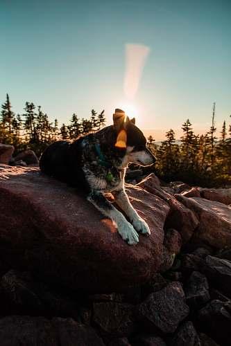 dog person taking photo of short-coated black and white dog lying on rocks during daytime south erickson lake