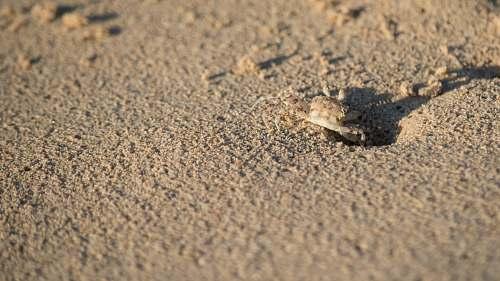 sunrise beige soil crab