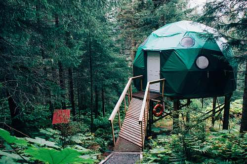 forest green dome near brown wooden dock near green leaved trees land