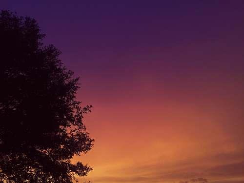 sunset green tree at golden hour dusk