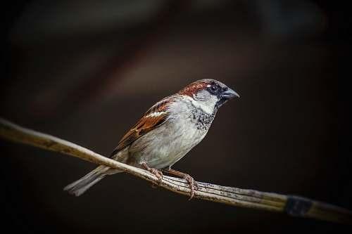 bird white and brown bird animal