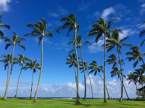 tropical green palm trees on green grass field under blue sky during daytime kauai