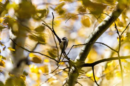 bird brown bird perching on tree tree