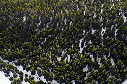 frisco aerial photography of trees in winter at daytime colorado