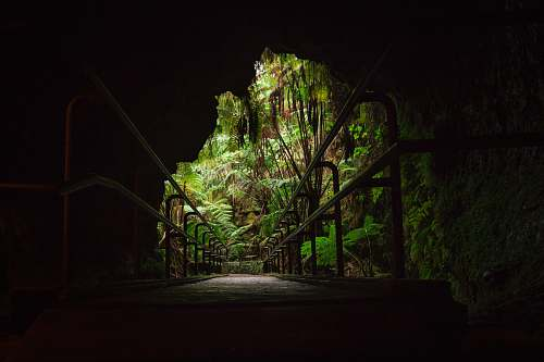 forest bridge architectural photography cave