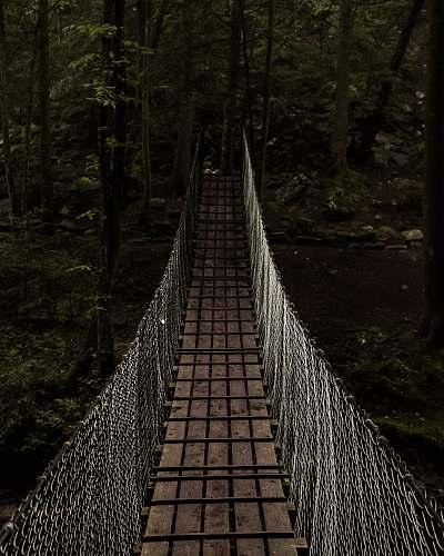 forest bridge towards forest bridge