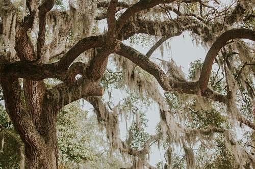 savannah green leafed tree near tree at daytime united states