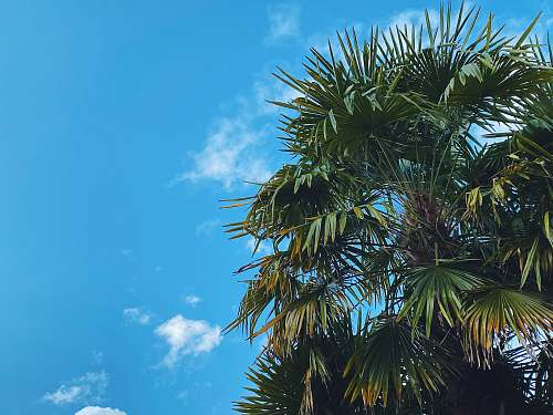 plant green palm tree under blue sky during daytime arecaceae