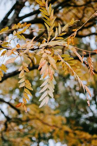 plant green tree leaf