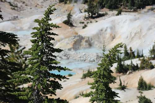 explore green trees on hills conifer