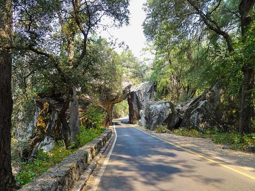 plant grey road pass under a stone cave with green trees landscape photography road