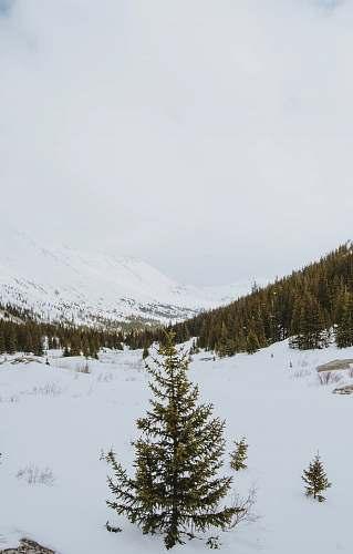 plant high-angle photography of tree on snow fir