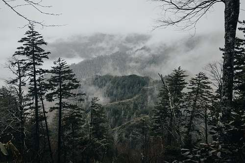 grey photo of green mountains with fog forest