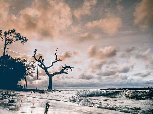 beach photo of trees beside body of water perdido key
