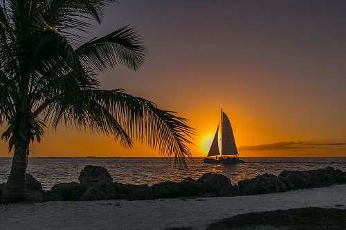 beach sailboat at sea near seashore ocean