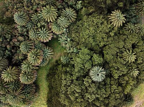 conifer top-view photography of green trees flora