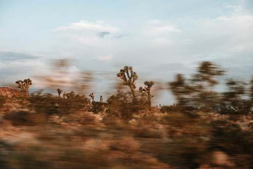 joshua tree national park brown leafed trees during daytime blur