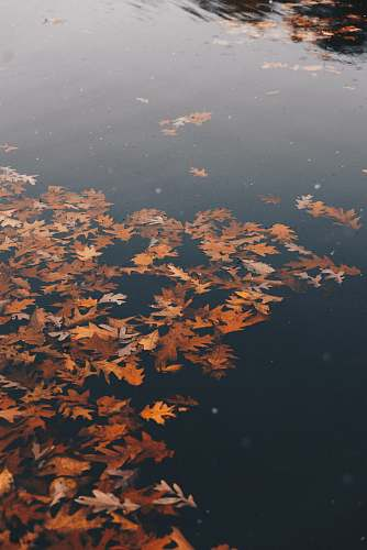 autumn brown withered leaves on water at daytime dallas