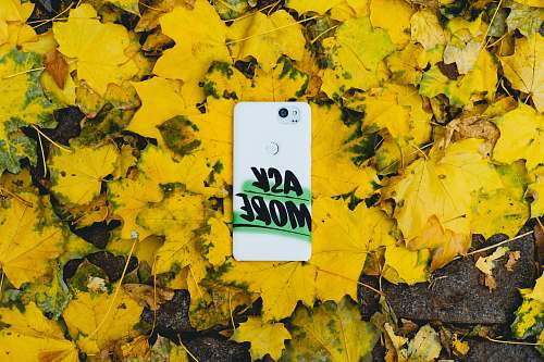 phone case white smartphone on yellow maple leaves brooklyn heights