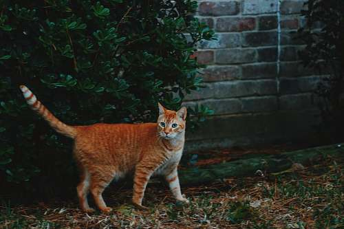 pottery photo of orange tabby cat near plant potted plant