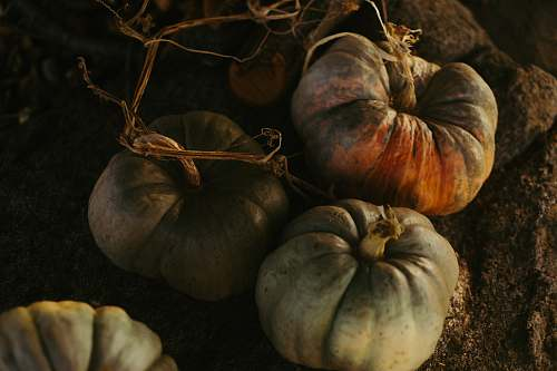 flora pumpkin plants on soil food