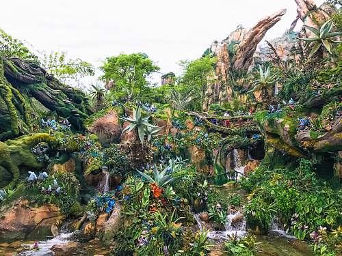 forest forest illustration wallpaper tree